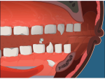 Pearly Whites: The tooth, the whole tooth and nothing but the tooth.